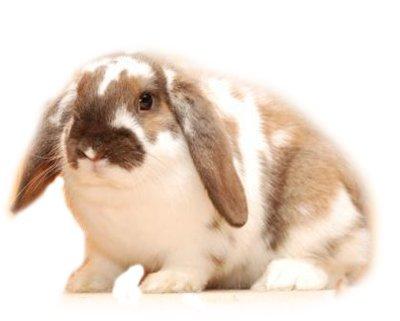 рассылка о кроликах